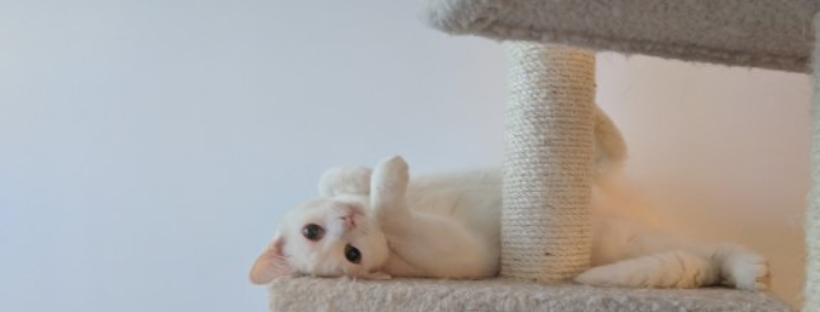 The Story of Our Deaf Cat and Why Deaf Pets are Awesome!